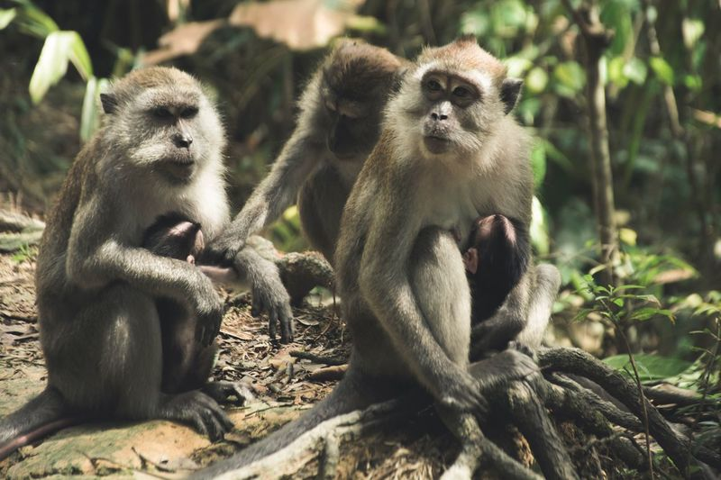 Why so serious? Animals In The Wild Animal Themes Monkey Animal Wildlife Two Animals Animal Family Mammal Infant Young Animal Day Togetherness Outdoors Nature Baboon Sitting