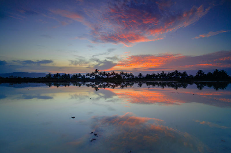 Sunset Reflection Outdoors Landscape Water Nature Cloud - Sky Scenics Beauty Multi Colored Dawn No People Rice Paddy Tree Beauty In Nature Reflection Coconut Trees Coconut Trees Reflection Kelantan Malaysia Burning Sky Sunset Water In Paddy Field Serenity In Nature Sunset And Clouds  Travel Destinations Day