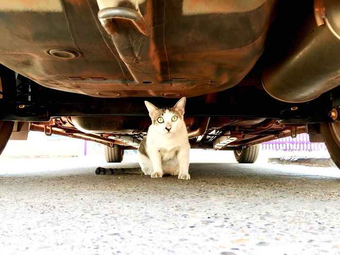 Cat sit under the car Eyem Gallery EyeEm Selects EyeEm Best Shots Cat Sitting Cat Under The Car Cat Collection Cat Domestic Animals Animal Themes One Animal Pets No People Day Domestic Cat