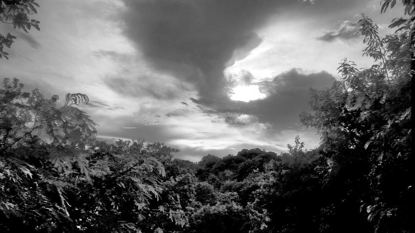 Tree Nature No People Outdoors Beauty In Nature Sky Day Mobile Photography Black & White Photography Nature St. Croix USVI