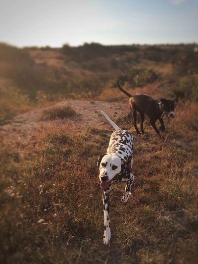 Dog on field against sky