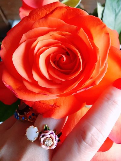 Rosen, Hand Lifestyles Life Human Body Part Hand Accessoires Ring Flower Rose - Flower Petal Nature Fragility Flower Head Beauty In Nature Close-up Indoors  Freshness