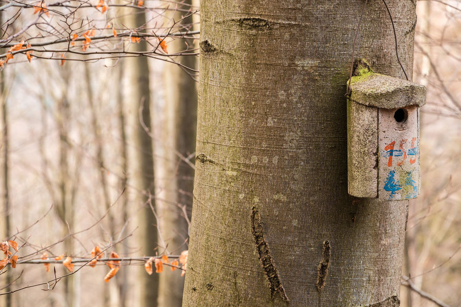 Little bird table on a big old tree Birdhouse Branch Close-up Day Focus On Foreground Forest Growth Land Nature No People Outdoors Plant Selective Focus Textured  Tranquility Tree Tree Trunk Trunk Wall - Building Feature Wood - Material