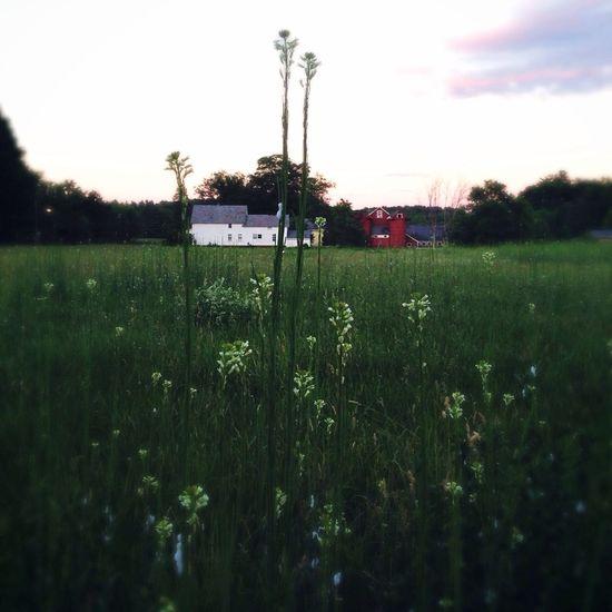 Dusk Twilight Meadow Farm