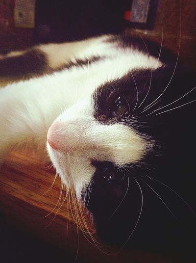 Cat EyeEm Best Shots Eye4photography  Animals