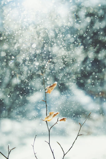 EyEm Selects Sunlight Snowing Snow Hiking Adventures Nature Photography Nature_collection Nature EyeEm Best Shots Beauty In Nature Campinglife Camping Mountain Peak Mountain Hikingadventures Hiking Outdoors Bushcraft Winter Cold Cold Winter ❄⛄ Bokeh Bokeh Photography