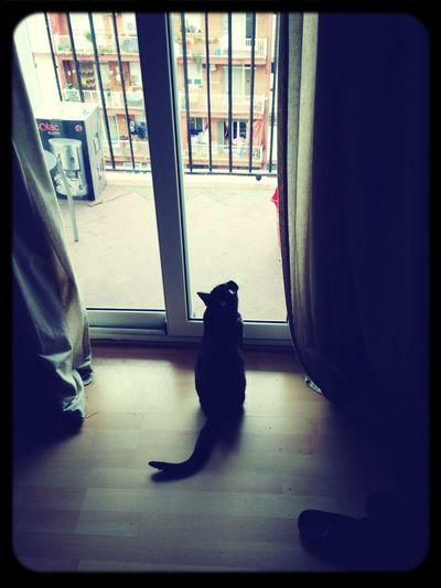 Little curra cat :)
