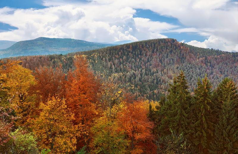 Autumn view of