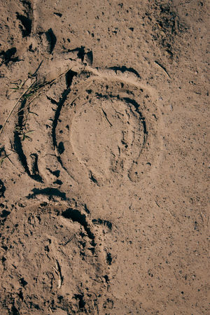 Animal Track Backgrounds Brown Close-up Day FootPrint Full Frame High Angle View Mud Nature No People Outdoors Paw Print Sand Textured  Track - Imprint