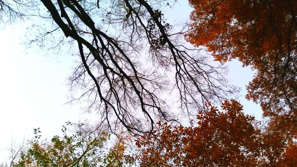 Re-edit Redo Is this version better? Trees And Sky Trees Fall Branches Sky Life And Death Life And Death In Nature Autumn Leaves Orange Cycle Leaves Nature EyeEm Nature Lover