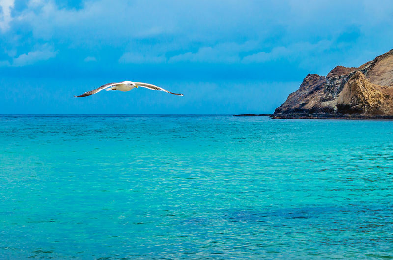 Seagull looking for its prey! Bird Photography EyeEmNewHere Seashore Beauty In Nature Bird Blue Sky Day Nature No People One Bird Flying Outdoors Scenics Sea Seagull Seagull ın Flıght Sky Water