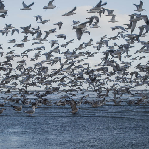 Flock Of Birds Bird And Beach Bird And Beach Scape Flight Nature Water