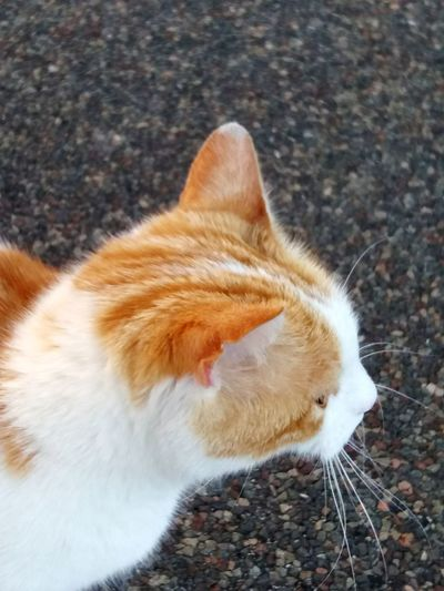 Samsungj5photography📱 Animal Themes Cat Street Pets Feline Domestic Cat Ginger Cat Winter Relaxation Whisker Close-up