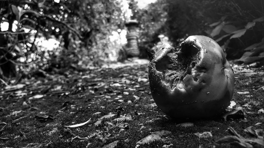 Tempt... Nature Focus On Foreground Rotten Fruit Rotten Deterioration Destruction Black And White Black And White Collection  Blackandwhite Blackandwhitephotography Black & White Dark Darkness And Light Check This Out Darkart EyeEm Gallery Beauty In Nature