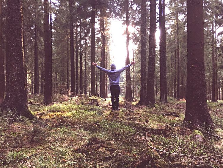Forest Tree Arms Raised Human Arm Limb Tree Trunk Arms Outstretched Nature WoodLand Human Body Part One Person Adults Only Healthy Lifestyle Standing Balance Day Leisure Activity Hikking Travel Destinations Deep Woods Young Man Adventure Liberty Sunset Sunlight