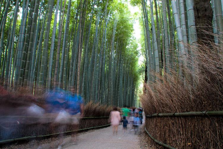 Blurred motion of people walking amidst bamboos at arashiyama
