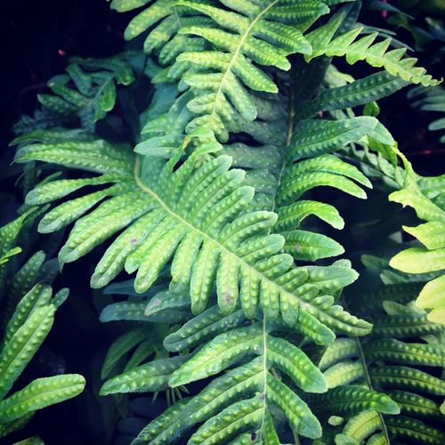 Ferns Hedgerow Plants