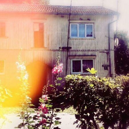 House Flower Sun Summer sunlight