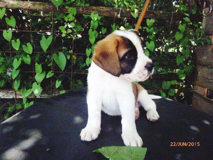 Cute Pets Dog Puppy Mynewfamilymember ♥ Enjoying Life