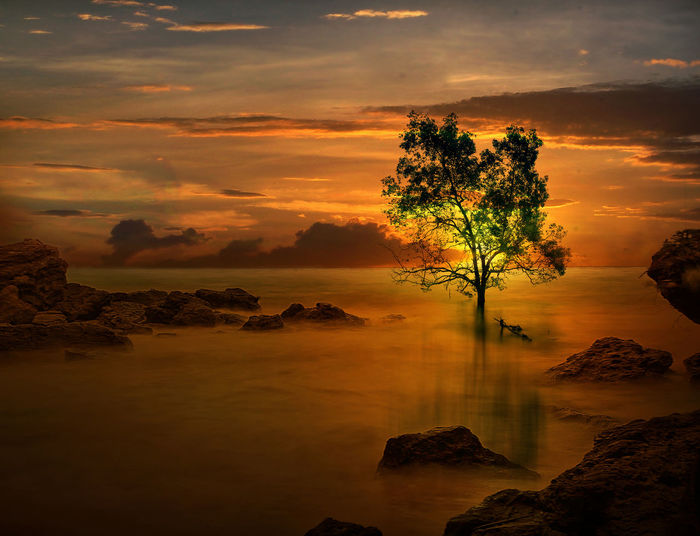 Sunset at Tanjung beach Water Sky Beauty In Nature Cloud - Sky Tranquility Scenics - Nature Rock Sunset Tranquil Scene Rock - Object Solid Nature Tree No People Orange Color Idyllic Sea Land Plant Outdoors Tree On Beach