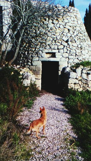 Puglia Salentoland Salento Trullo Fox🐺 Like A Fox My Dog Doglover Dogstagram Doglife I Love My Dog Seppia Me And My Dog My Dog <3 That's My Dog I Love My Dog❤ Nature_collection My Fantastic World Love ♥ In To The Wild Old House - Stone House Old Buildings Old House EyeEm Best Shots Eye4photography