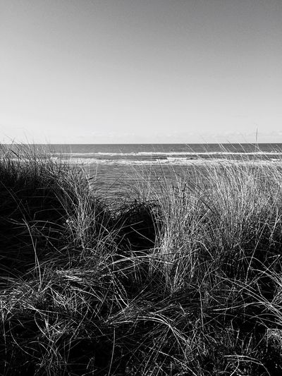 Sea Sea And Sky Grass Water Northsea Blackandwhite Nature Tranquility Landscape Beauty In Nature Clear Sky