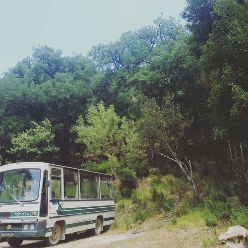 142 Into The Wild Tapada Transportation Tree Day Growth Nature Outdoors