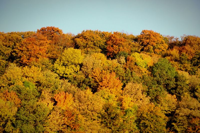 Autumn trees in forest against sky