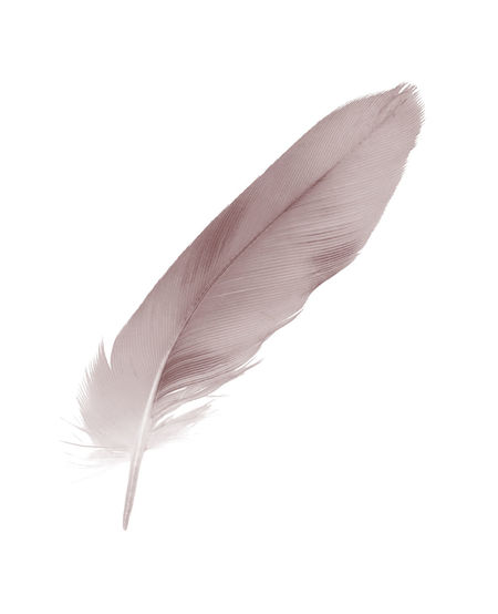 Feather  Lightweight Softness Close-up Vulnerability  Fragility Studio Shot White Background No People Indoors  Cut Out Quill Pen Single Object Copy Space White Color Nature Still Life Simplicity Plant