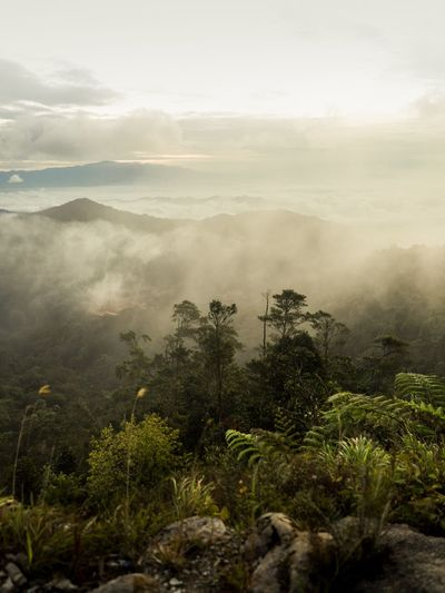 Scenery Landsacpe Nature Travel Photography Landscape Mountain Foggy Trees Misty Forest Fog Sunrise Sky Sun Dawn Mountain Peak Social Issues Pinaceae Rainforest EyeEmNewHere The Great Outdoors - 2018 EyeEm Awards