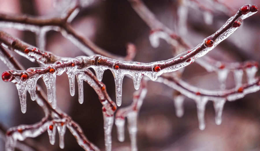 Close-up of icicles on branch during winter