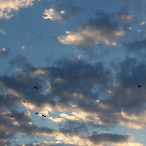 Flying Cloud - Sky Bird Sky Low Angle View Animal Themes Animals In The Wild Nature Mid-air Wildlife Flock Of Birds Large Group Of Animals Animal Wildlife No People Sky Only Sunset Outdoors Scenics Beauty In Nature No Filter