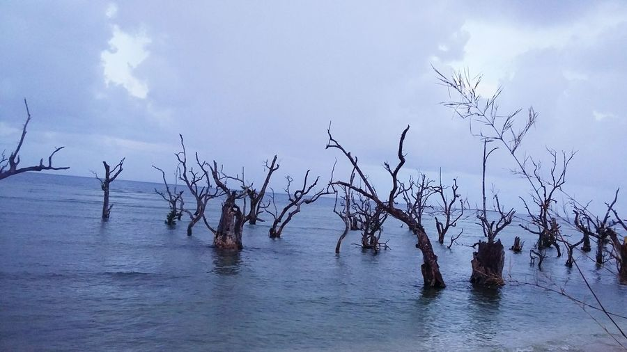 Share Your Adventure Trees Dead Mangroves ConfortZoneDistroyed Typhoonpablo Sunriseblvd Bagang Davao Oriental Philippines