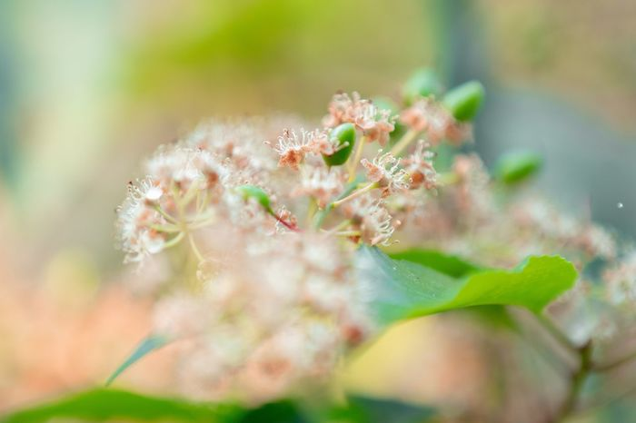 Close-up Plant Growth Selective Focus Day Nature Animal Wildlife Fragility Beauty In Nature Focus On Foreground Flower Outdoors