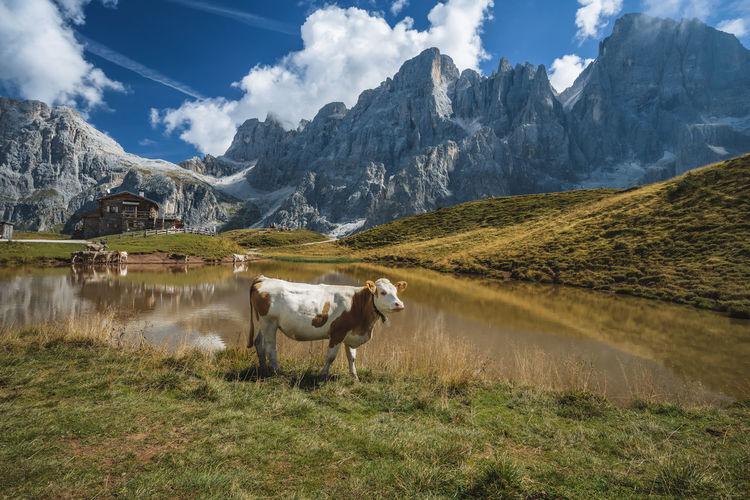 Baita segantini mountain and refuge in background. rolle pass, trentino province, italy, europe