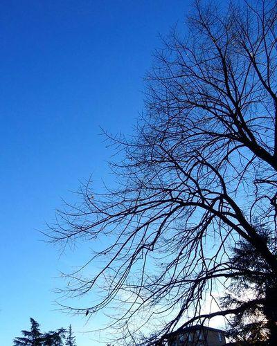 """13.01.16 """"Gli alberi sono le colonne del mondo, quando gli ultimi alberi saranno stati tagliati, il cielo cadrà sopra di noi. """" Rami Cielo Alberi Trees Blusky Clearksy Sky Blue Nature Naturelovers Loves_nature Vivo_natura Reggioemilia Ig_reggioemilia Ig_emiliaromagna Ig_italia Igersreggioemilia Igersemiliaromagna Volgoreggioemilia Volgoemiliaromagna Tagsforlikes Nikoncoolpixs9900 Nikonphoto Photooftheday Foto_naturel fotografa_re instagood Instagram"""