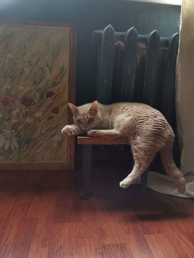 Cat relaxing on hardwood floor