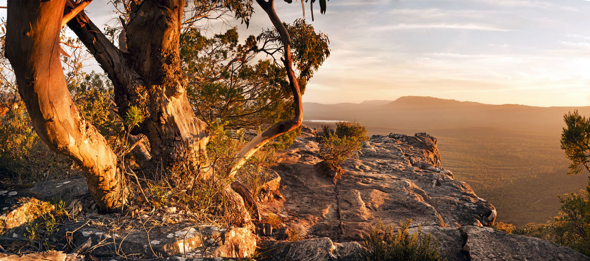 Stunning Australian bush landscape scenic from a mountain top in the Grampians National Park Sky Beauty In Nature Tranquility Scenics - Nature Tranquil Scene Tree Nature Mountain Plant Sunset Non-urban Scene Environment Sunlight Rock No People Cloud - Sky Solid Landscape Rock - Object Idyllic Mountain Range Outdoors Eroded Formation Australia The Grampians Mountains Panorama Gum Tree