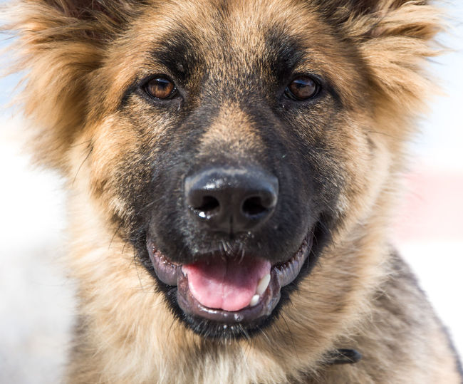 Animal Themes Close-up Day Dog Domestic Animals Looking At Camera Mammal Mouth Open Nature No People One Animal Outdoors Pets Portrait