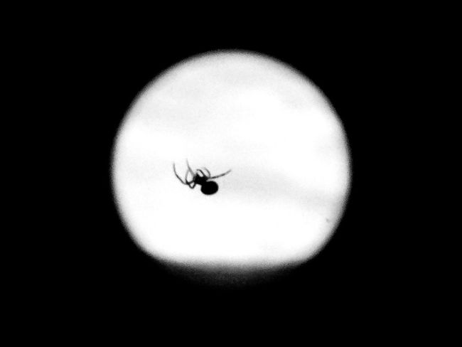 One Animal Insect Night Outdoors Animals In The Wild Animal Wildlife Spider