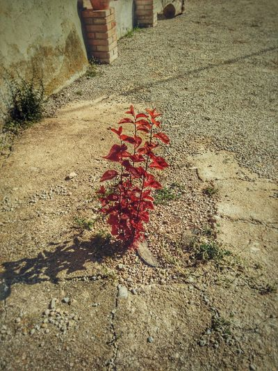 Flor Viaje Parada Planta Myfoto Myphoto Color Naturaleza Roja Red Outdoor