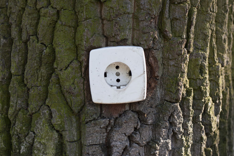 Steckdose Baumstamm Baum Umweltschutz Umwelt Erneuerbare Energien Strom Elektrizität Renewable Energy Clean Energy Bark Close-up Day Electric Electrical Electricity  Energy Environment Green Green Energy Nature No People Outdoors Outlet Power Power In Nature Socket Tree Electric Plug Daytime