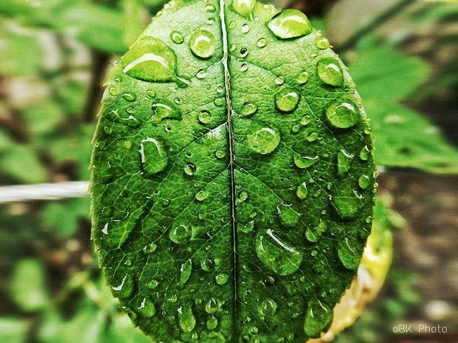 Macro Leaf 🍂 Waterdrops Fujifilm Finepix S4800 Macro Beauty
