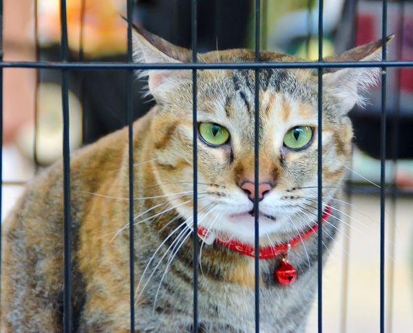 Stare me down! Pets Portrait Looking At Camera Feline Domestic Cat Cage Trapped Close-up Whisker Cat Stray Animal