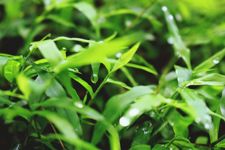 Green Nature Green Leaves Drops Droplets Waterdrops Morning Grassy