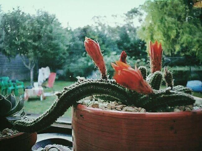 Cactus I Love Cactus Cactuslove