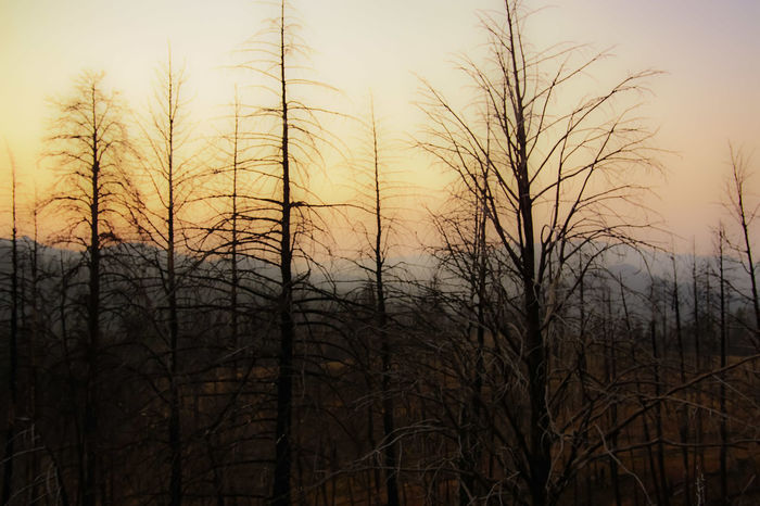 Tree Bare Tree Accidents And Disasters Sunset Nature Forest Outdoors Forest Fire No People Growth Winter Sky Day Beauty In Nature