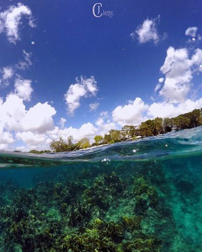 V I E W S 🐚... Diving Underwater Barbados Adventure Ocean Reef Coral Outdoorsman Getoutside Goexplore Waterman Saltlife Paradise Underwater Photography Underwaterart Sky Clouds Trees Friends Family Split Gopro Goprophotography_ Picoftheday