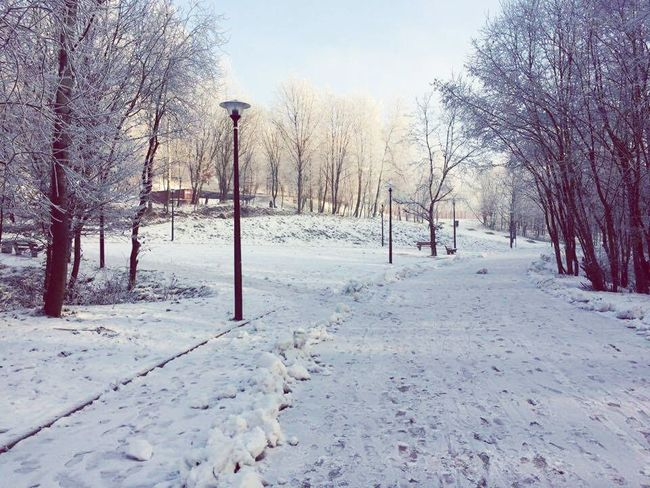 144. Snow Cold Temperature Winter Tree Bare Tree Sky Outdoors Day Beauty In Nature Nature Tranquil Scene No People Tranquility Park Spaziergang Schnee Schneelandschaft Kalt Cloud - Sky Landscape