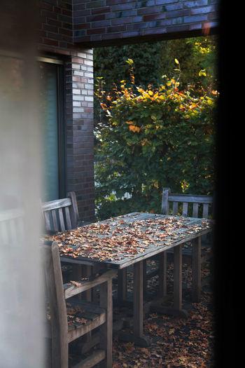 Fallen autumn leaves on wooden table seen through door